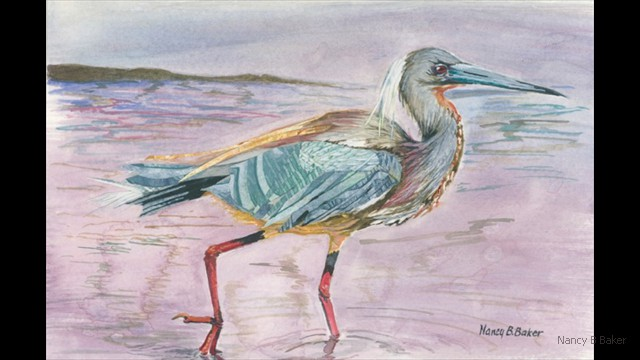 TriColored Heron 9x6